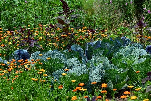 優光泉の野菜は国産です